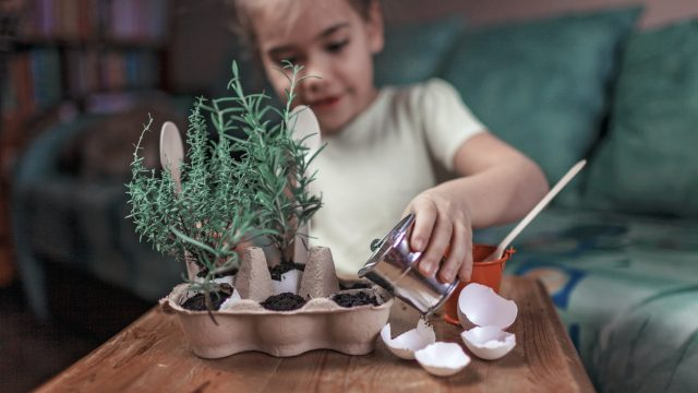 Pretty schoolgirl growing kitchen herbs in the eggshell, zero wa